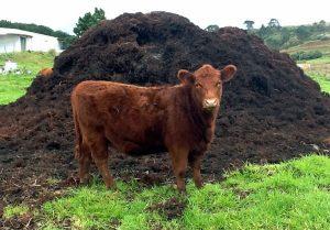 Коровяковый настой