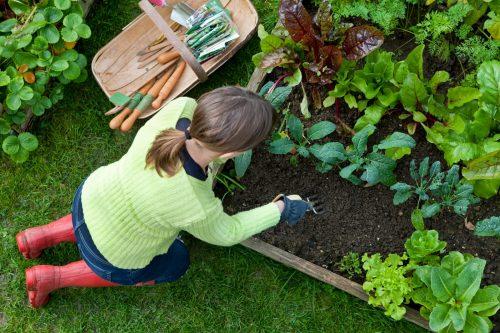Разбиваем-сад-и-огород-самостоятельно