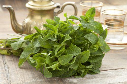 Mint-Health-Benefits