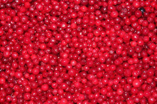 ягода брусники