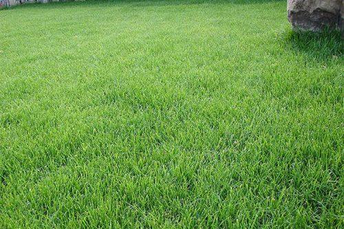 Травяной настой для огорода - удобрение без лишних затрат