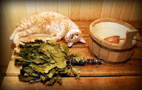 Листья эвкалипта - отвары и настойки для лечения и восстановления