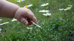 Травы детям помогают — от болезней защищают