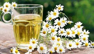 Ромашковый настой — недугам облегчение, красоте улучшение