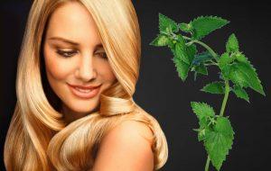 Гинекологические свойства крапивы — эффективная помощь женщинам