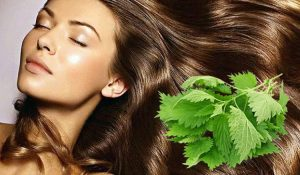 Лучшее лекарство от природы для волос — настой крапивы