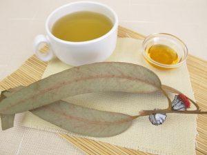Листья эвкалипта — отвары и настойки для лечения и восстановления